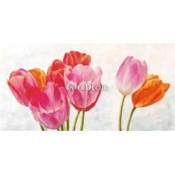 Barevné tulipány 1