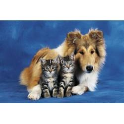 Pes s kočkami