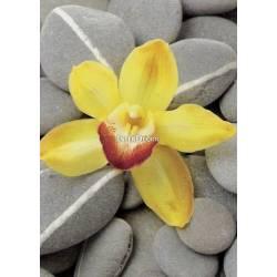 Kameny s květy