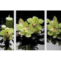 Kameny s orchideji