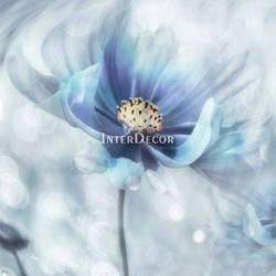 Modrý květ 2
