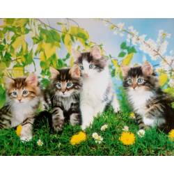 Obraz s koťátky