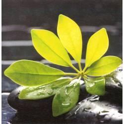 Zelený list na kameni