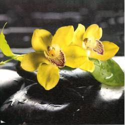 Žlutá orchidej na kameni