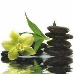 Orchidej na kameni