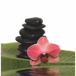 Červená orchidej na kameni