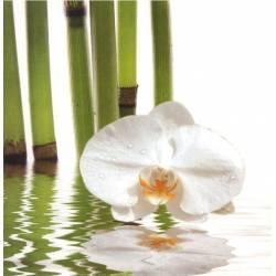 Bílí orchidej s bambusy