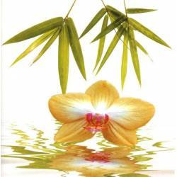 Žlutá orchidej s bambusy