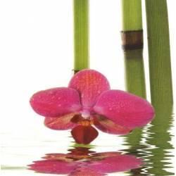 Červená orchidej s bambusy