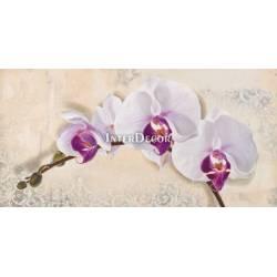 Obraz  orchidej