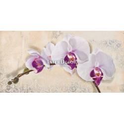 Obraz růž. orchidej