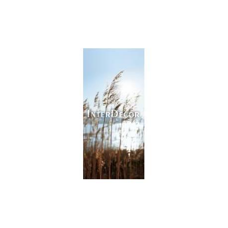 Suchá tráva