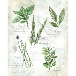Zelené bylinky 1