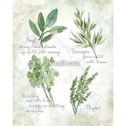 Zelené bylinky 2