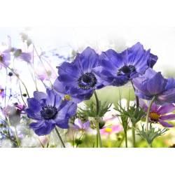 Modré květy