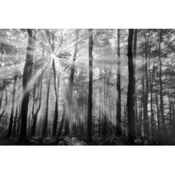 Prosluněný les II