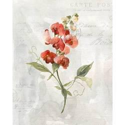 obraz červená orchidej