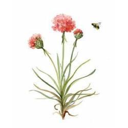 Botanická rostlina 2