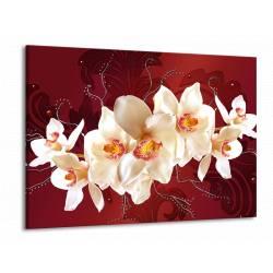 Obraz bílá orchidej