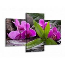 Fialová orchidej