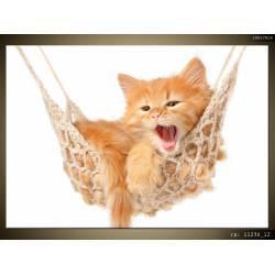 Kotě na houpačce