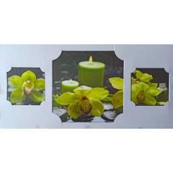 Kameny se zelenou orchidejí