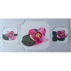 Kameny orchidejí