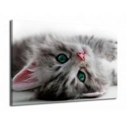 Obraz ležící kočka