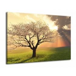 Obraz strom v květu