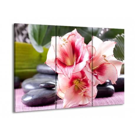 Růžové květy 4