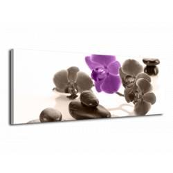 Kameny s orchideji harmonický obraz