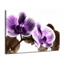 Obraz fialová orchidej
