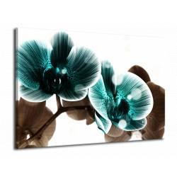 Obraz modrá orchidej