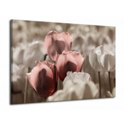 Tulipány 4