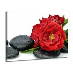 Kameny s květy 3