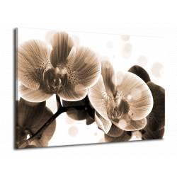 Hnědá orchidej