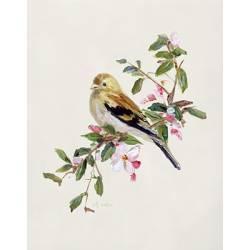 Jarní píseň růžového ptáčka