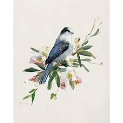 Jarní píseň modrého ptáčka