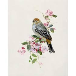 Jarní píseň zaltočerného ptáčka